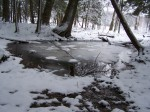 vernal pool in winter